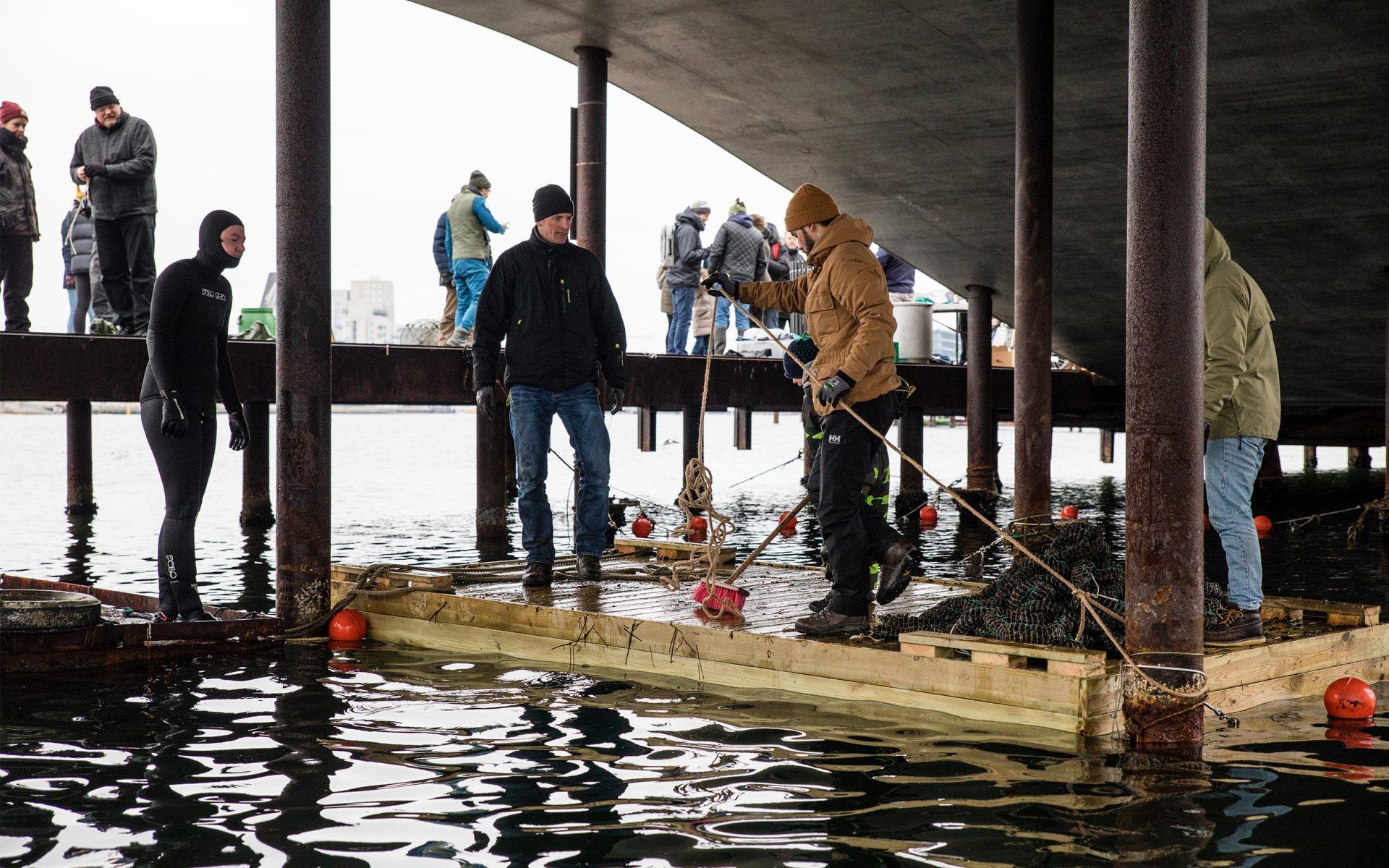 Bliv havbonde for en dag / Foto: Andreas Raun Arneberg