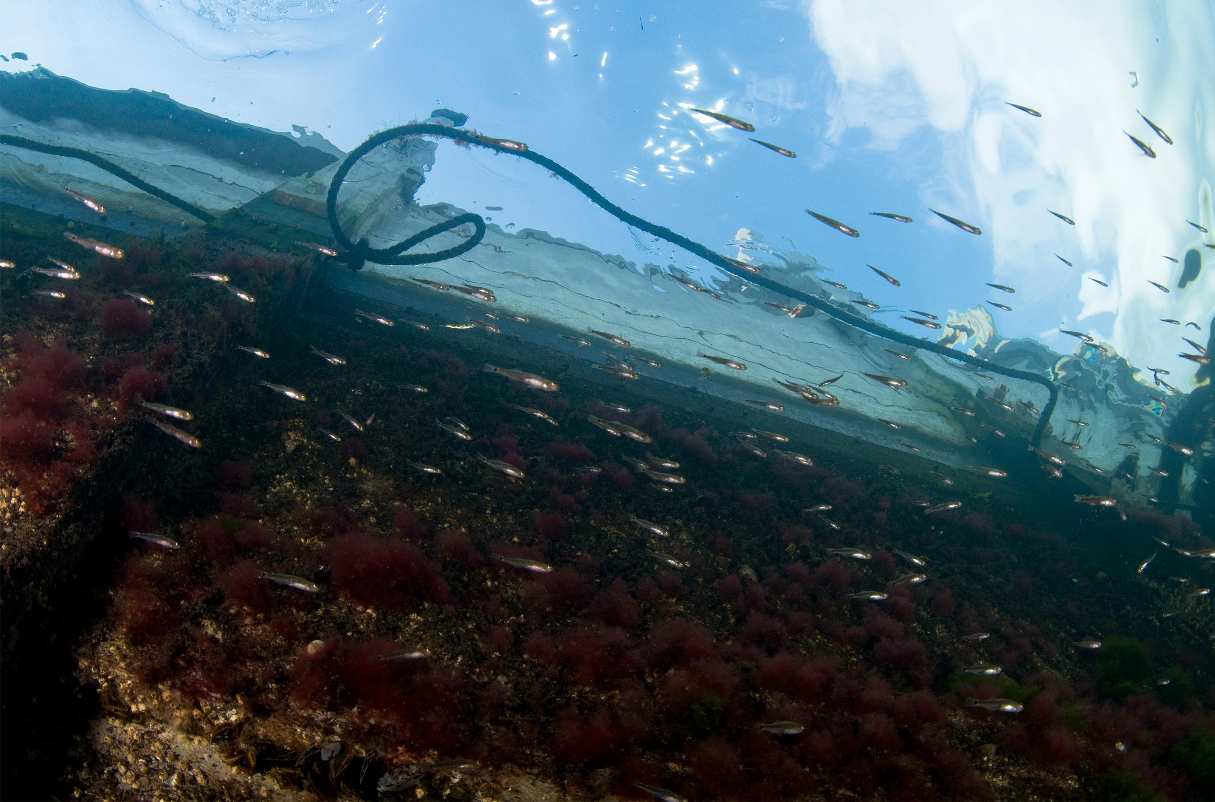 Fisk i havnen / Foto: Martin Oliver Macnaughton